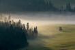 Poranna jesienna mgła.