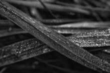 GRASS - Morning Dew On The Meadow