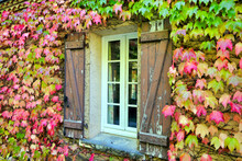 Virginia Creeper Leaves Surrounding French Farmhouse Windows With Shabby Shutters, Undergoing An Autumnal Change Of Colour