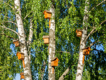 There Are Many Beautiful, Funny Birdhouses On The Birches In The Park.