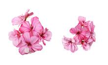 Set Of Pink Geranium Flowers Isolated