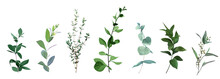 Mix Of Herbs And Plants Vector Big Collection.