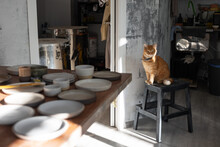 Cat On Stool In Pottery