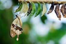Butterfly On A Tree