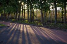冬の夕暮れ、道に横たわる木々の影 Shadows Of Trees Lying On The Road At Dusk In Winter