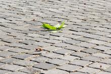 Autumn. A Fallen Maple Leaf Lies On The Cobblestone Pavement