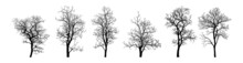 Set Of Silhouettes Of Dry Bare Trees. Isolated Objects, Vector Illustration. Scary Dead Trees Silhouettes Collection. Dead Trees. Dead Tree Without Leaves Vector Illustration Sketched