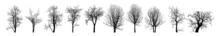 Dead Tree Without Leaves Vector. Isolated Concept Of Dead Trees Set. Large Collection Of Dead Trees Silhouettes Set. Design, Tree, Silhouette, Limb, Isolated, Background, Dry.
