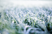 Morning Dew Froze On A Green Grass. First Frost. Preparing The Lawn For Wintering. Close-up. Copy Space. Banner. Late Autumn. Conceptual Background Of Weather Forecast. Nature Detail. Winter Season