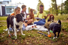 A Group Of Students Having A Good Time In The Park With Their Dogs. Friendship, Rest, Pets, Picnic