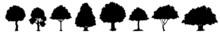 Tree Silhouettes - Red Maple ,sugar Maple, Oak, Poplar, Green Oak, Birch. Realistic Trees Silhouette. Vector Set Of Natural Trees. Tree Silhouette.