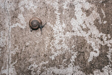 Snail On Dirty Textured Cement Wall