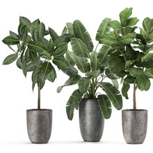 3d Illustration Exotic Plants In A Rusty Pot On White Background