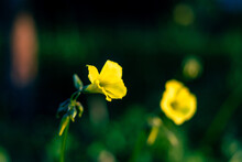Flor Silvestre 2