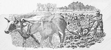 Fieldwork: Man Ploughing Field With Oxen; Woman Weeding With A Hoe. Portrait From Mozambique 10,000 Meticais 1991 Banknotes.