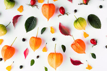 Bright Yellow Autumn Leaves, Chestnuts, Pine Cones And Orange Physalis In Composition On A White With Copy Space For Text. Beautiful Autumn Frame.