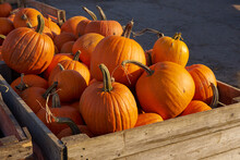Halloween Pumpkins In Wooden Boxes On The Market.