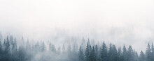 Mystic Landscape With Fog