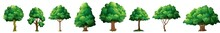 Tree Illustrations. Vector Oak Tree. Set Of Trees Isolated. Vector. Tree, Leaf, Nature, Vector, Plant, Growth, Foliage, Element, Illustration, Isolated, Green, Environment, Outdoor, Season