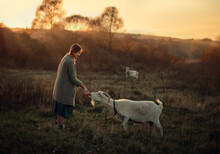 Photo Of A White Goat In A Meadow Next To A Girl.