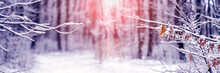 Winter Christmas And New Year Background With Snow-covered Tree Branches During Sunrise, Winter Landscape With Snow-covered Trees