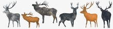 Watercolor Deer Illustration Of, Isolated Hand Drawing Of The Forest Animal