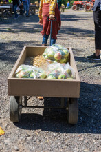 A Young Girl Pulls Wagon Full Of Freshly Picked Apples