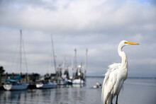 A Beautiful Egret In A Fishing Village