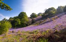 Girl Hiking In Flowers Field
