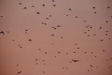 Flock Of Birds Flying At Sunset Orange Sky