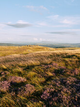 Wild Heather And Pendle Hill At Sunset