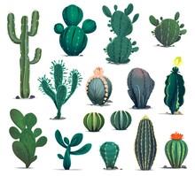 Mexican Desert Cactuses. Cartoon Prickly Succulent Plants. Mexico Desert Flora, Exotic Cacti Or Flowering Barrel, Senita And Saguaro Cactuses. Western Game Environment Succulent Plants Vector Asset
