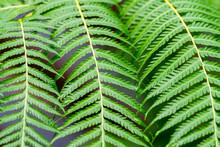 Close Up Of Fern Leaf
