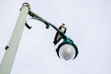 Osprey On A Lamp Post
