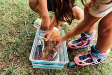 A Small, Calico Guinea Pig Passed Away.