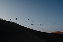 Seagulls Above Sand Dune.