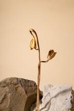 Dried Flowers Between Stones