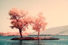 Trees On The Island