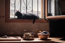 Black Cat In The Kitchen Window
