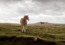 Two Friendly Young Horses