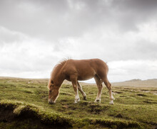 Solitary Horse On A Field
