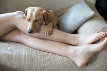 Dog Sleeps On Couch Between The Owner's Legs