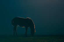 Horse With Horsehair Illuminated At Sunset With Backlight Against Dark Background