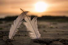 Feather On The Field