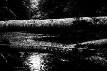 Abstract Black And White Hard Contrast Nature Texture. Fallen Trees Over River