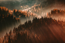 Sun-rays Through Misty Pine Forest Autumn Nature Background