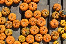 Orange Jack Be Little Pumpkins Background.
