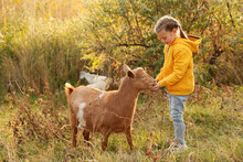 Farm Animal. Cute Little Girl Feeding Goat On Pasture