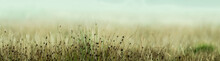 Long Moorland Grass Up Close With Diffused Background