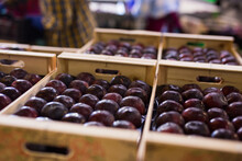 Closeup Of Freshly Harvested Ripe Organic Purple Plums In Wooden Crates Stacked In Storage Warehouse. Rich Farm Harvest